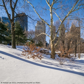 Fresh Fallen Snow in Central Park
