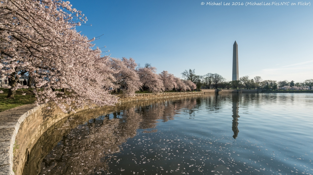 Cherry Blossoms in Washington DC - 2016